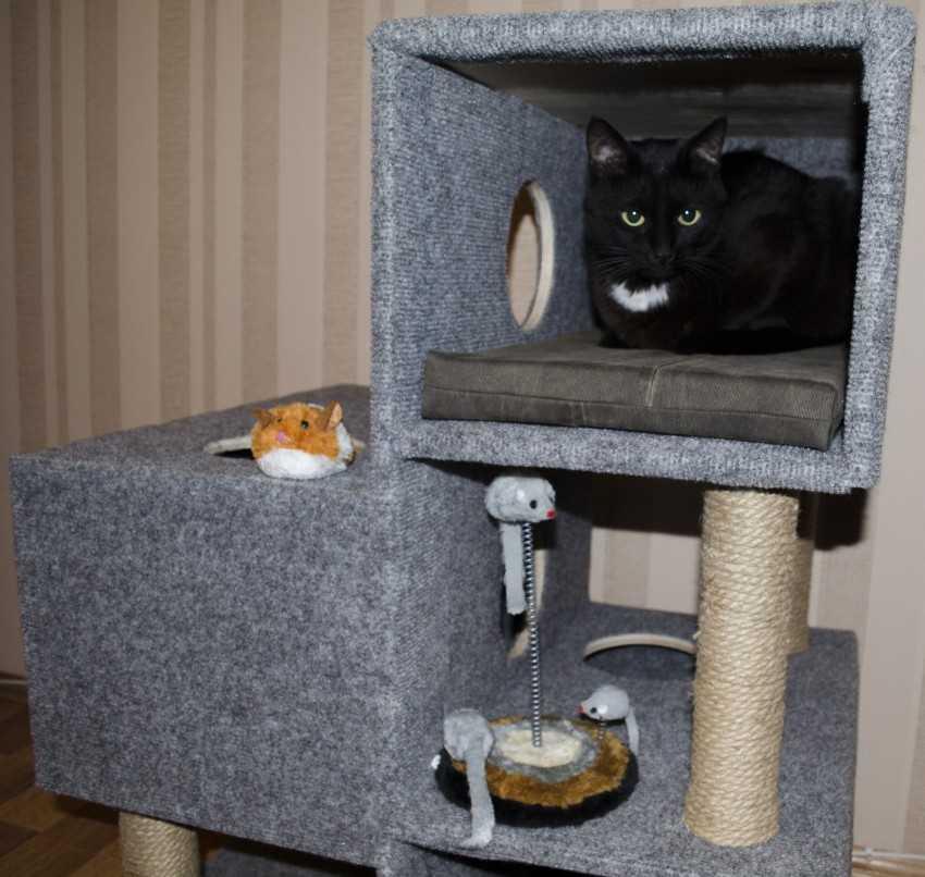 ваших знакомых сделать домик для кошки своими руками фото мой тяжкий